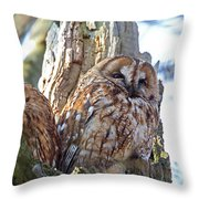Tawny Owls Throw Pillow