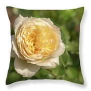 Tchaikovski Hybrid Tea Rose, White Rose Originally Produced By  Throw Pillow