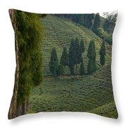 Tea Garden In Darjeeling Throw Pillow by Atul Daimari