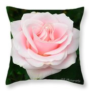 Tea Rose In Pink Throw Pillow