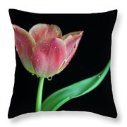 Teardrop Tulip Throw Pillow by Tracy Hall