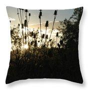 Teasel Sunset Glow Throw Pillow