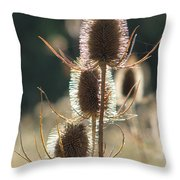Teasle In Morning Light Throw Pillow