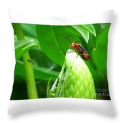Tell Me All About It Hon Throw Pillow