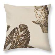 Tengmalm's Owl Throw Pillow