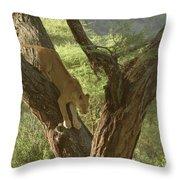 Terengeti Lioness Throw Pillow