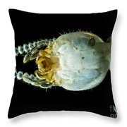 Termite Head, Lm Throw Pillow