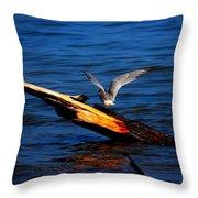Tern Around Throw Pillow by Amanda Struz