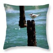 Tern Gulfstream Florida Throw Pillow