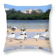 Terns At Fort Myers Throw Pillow