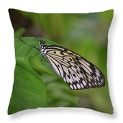 Terrific Capture Of A Paper Kite Butterfly On A Leaf Throw Pillow