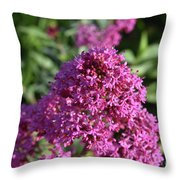 Terrific Cluster Of Blooming Pink Phlox Flowers Throw Pillow
