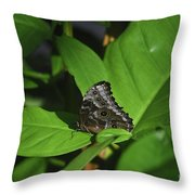 Terrific Eyespots On A Owl Butterfly On Leaves Throw Pillow