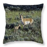 Teton Pronghorn Renewal Throw Pillow