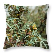 Texas Algerita Bush Throw Pillow
