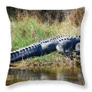 Texas Alligator Throw Pillow