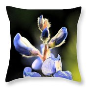 Texas Blue Bonnet Impressions 1 Throw Pillow