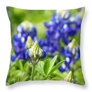 Texas Bluebonnets 003 Throw Pillow