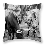 Texas Longhorn Steer In Black And White Throw Pillow