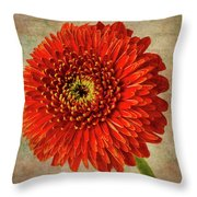 Textured Red Daisy Throw Pillow