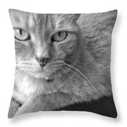 That Spotted Nose Throw Pillow