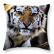 That Tiger Look Throw Pillow