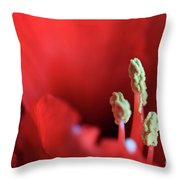 The Amaryllis Throw Pillow by Tracy Hall