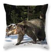 The American Grizzly Throw Pillow