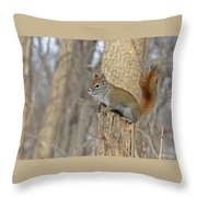 The American Red Squirrel Throw Pillow