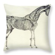 The Anatomy Of The Horse Throw Pillow by George Stubbs