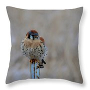 The Art And Image Of Kestrel Throw Pillow