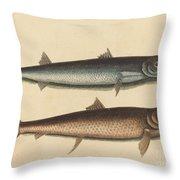 The Barracuda (esox Barracuda) Throw Pillow