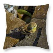 The Bath - American Goldfinch - Spinus Tristis Throw Pillow