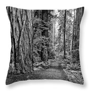The Beautiful And Massive Giant Redwoods Throw Pillow