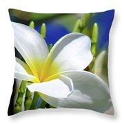 The Beautiful Plumeria  Throw Pillow