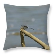 The Beauty Of An Dragonfly Throw Pillow