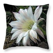 The Beauty Of Cactus Throw Pillow