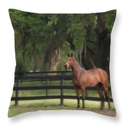 The Beauty Of The Thoroughbred Throw Pillow