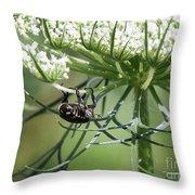 The Beetle Acrobat Throw Pillow