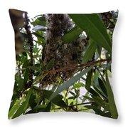 The Beginnings Of A Bushtit Nest Throw Pillow