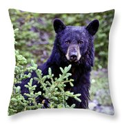 The Black Bear Stare Throw Pillow