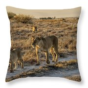 The Black Maned Lions Of The Kalahari Throw Pillow