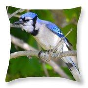The Blue Jay Throw Pillow by Stephanie  Varner