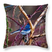 The Blue Of Winter In The Woods Throw Pillow