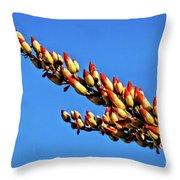 The Budding Ocotillo Throw Pillow