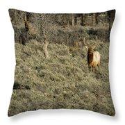 The Bull Elk Throw Pillow
