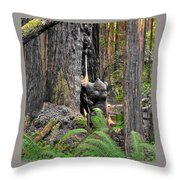 The Burly Bear Cub - Muir Woods National Monument - Marin County California Throw Pillow