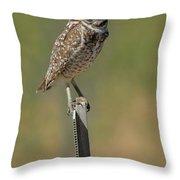 The Burrowing Owl Throw Pillow