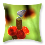 The Butterfly And The Coneflower Throw Pillow