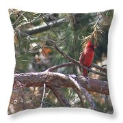 The Cardinal Throw Pillow